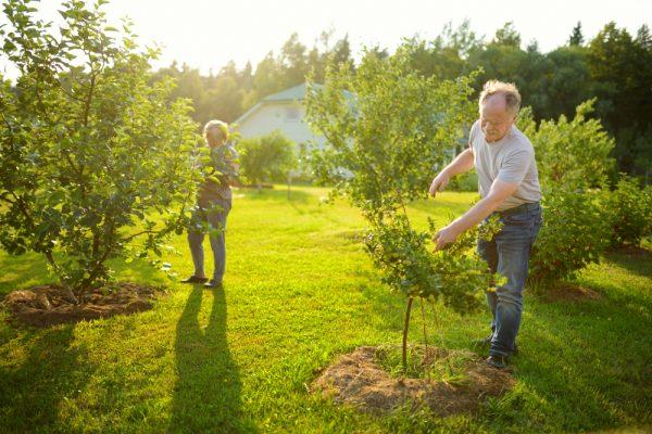 Zakładanie sadu w ogrodzie przydomowym